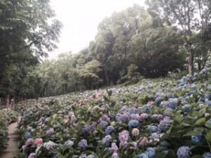 【ブログ】ハウステンボスの再生と感動体験戦略(2)